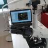 Stefanie_Grundacker_Mikroskop_web